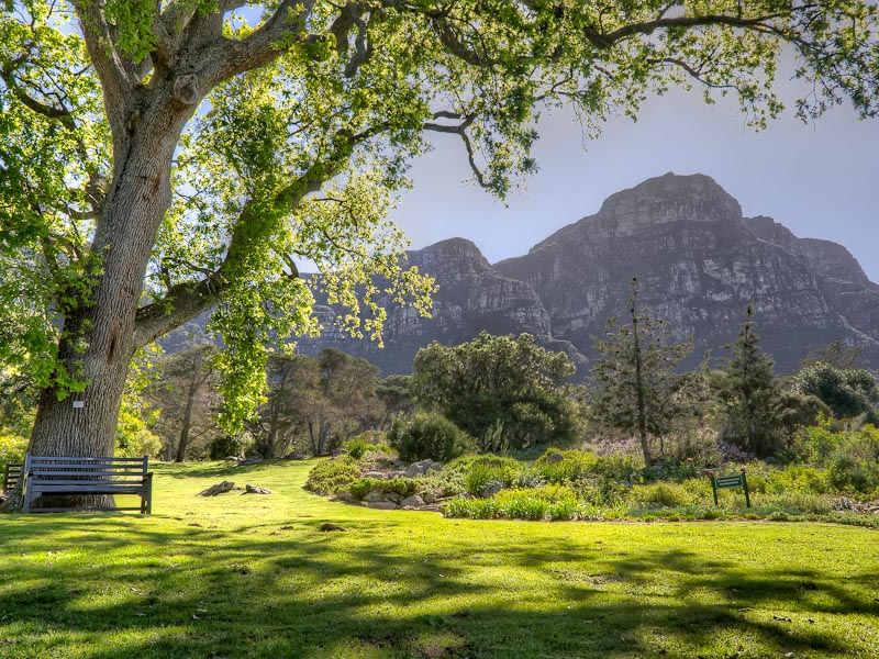 This image has an empty alt attribute; its file name is Michael-Morris-Trekking-Tripod-Kirstenbosch-Gardens-1.jpg